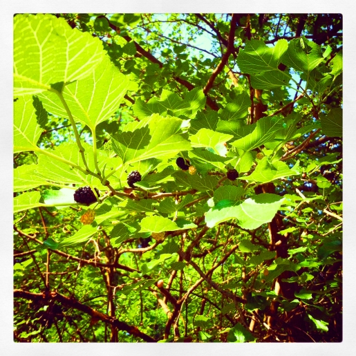 Mulberry Tree Bright